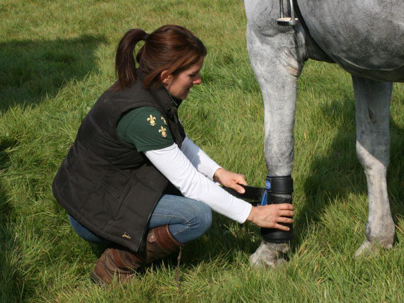Equestrian Horse teach train therapy Chichester